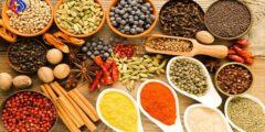 كيف ومتى تجمع الأعشاب والنباتات الطبية؟