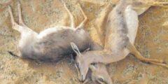 هل ملك الموت يقبض روح الحيوانات أم لا!