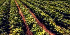 ترتيب الدول العربية من حيث الإنتاج الزراعي 2021