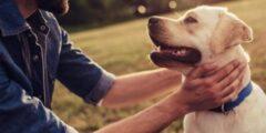 كيفية التطهر من لمس الكلاب