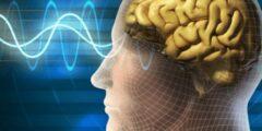 كثرة النسيان سببها انكماش الدماغ وأنواع الذاكرة عند الإنسان