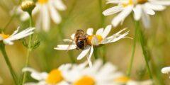 فوائد النحل للنبات