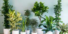 فوائد نباتات الظل داخل المنزل