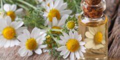 علاج لجيوب الأنفية بالأعشاب مجرب زيت الزيتون والبابونج والملح