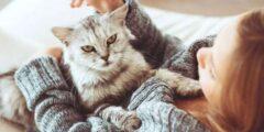 تربية القطط في المنزل وفوائد واضراره تربية القطط على الانسان