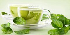 ما هي فوائد الشاي الاخضر في الوقاية من السرطان وحرق الدهون