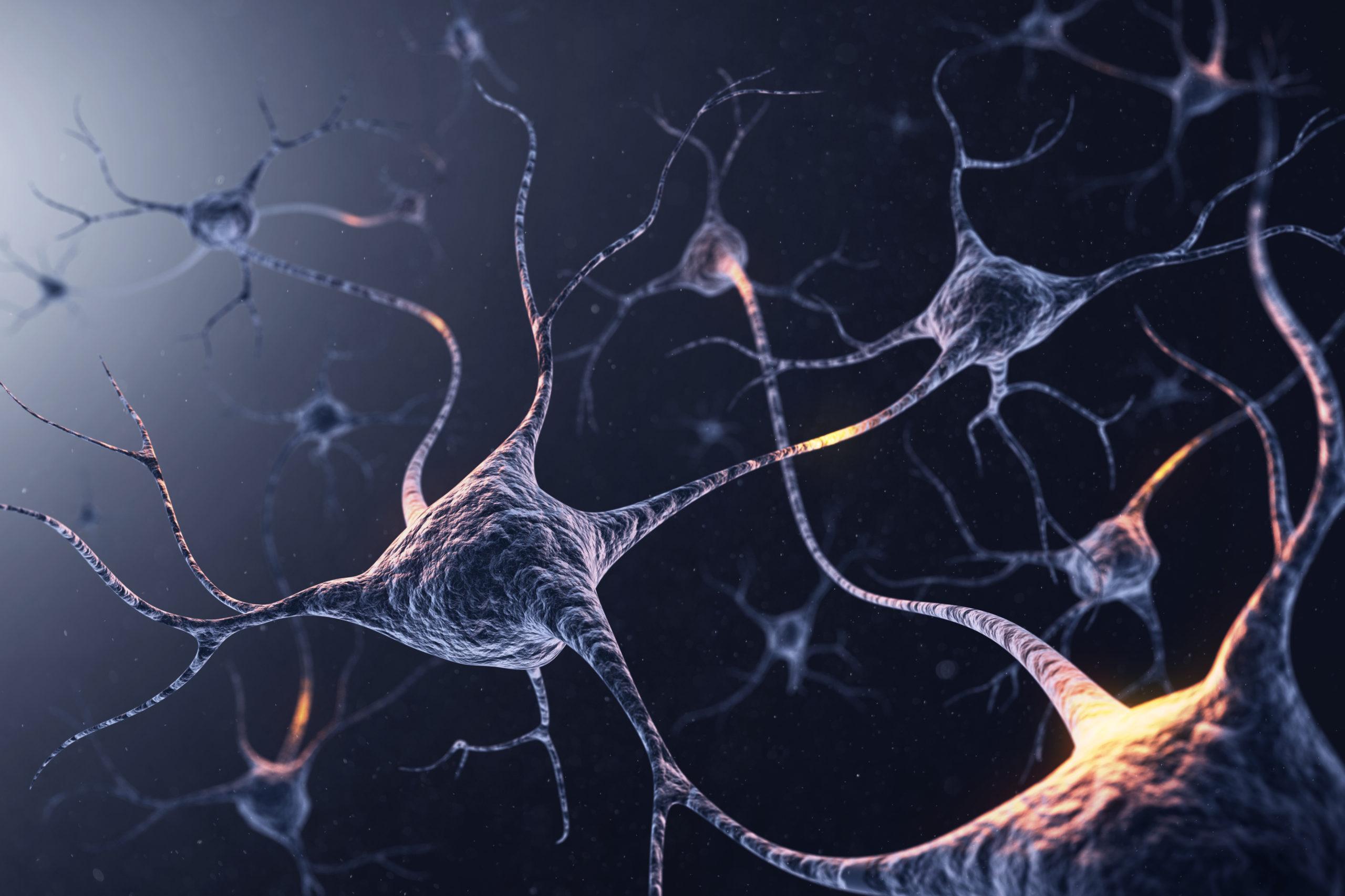 تعريف الخلايا العصبية باختصار